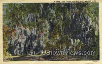 Ruskin Oak  - Ocean Springs, Mississippi MS Postcard