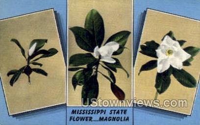Mississippi State Flower Magnolia - Misc Postcard