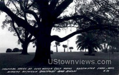 Tropical Trees At Edgewater Gulf Hotel - Real Photo - Edgewater Park, Mississippi MS Postcard