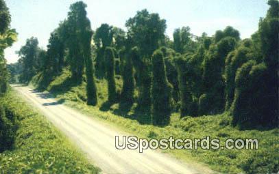 Kudzu along the Highway - Misc, Mississippi MS Postcard