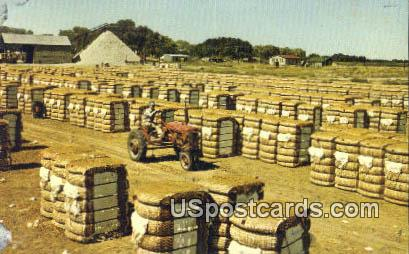 Bales of Cotton - Greenville, Mississippi MS Postcard