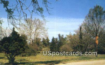 National Cemetery - Vicksburg National Military Park, Mississippi MS Postcard