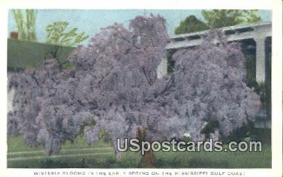 Wisteria in Blooms - Mississippi Gulf Coast Postcards, Mississippi MS Postcard
