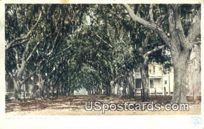 Benachi Avenue Oaks - Biloxi, Mississippi MS Postcard