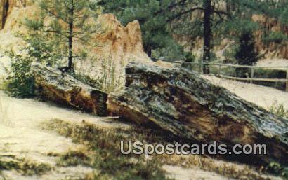 20,000 Pound Petrified Log, Petrified Forest - Flora, Mississippi MS Postcard