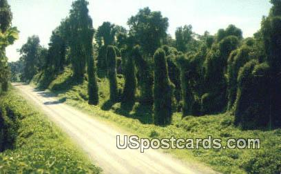 Kudzu along the Highway - Misc, Mississippi MS Postcard