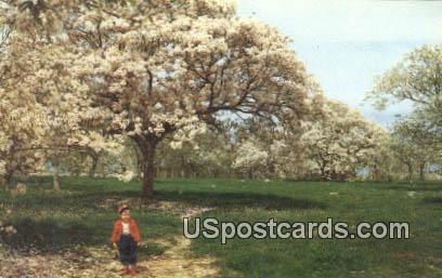 Tung Trees - Mississippi Gulf Coast Postcards, Mississippi MS Postcard