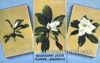 Magnolia, State Flower - Misc, Mississippi MS Postcard