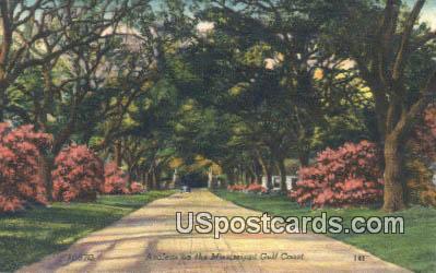 Azaleas - Mississippi Gulf Coast Postcards, Mississippi MS Postcard