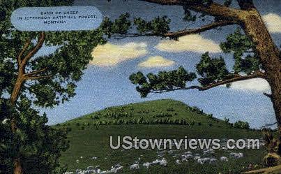 Band of Sheep - Jefferson National Forest, Montana MT Postcard