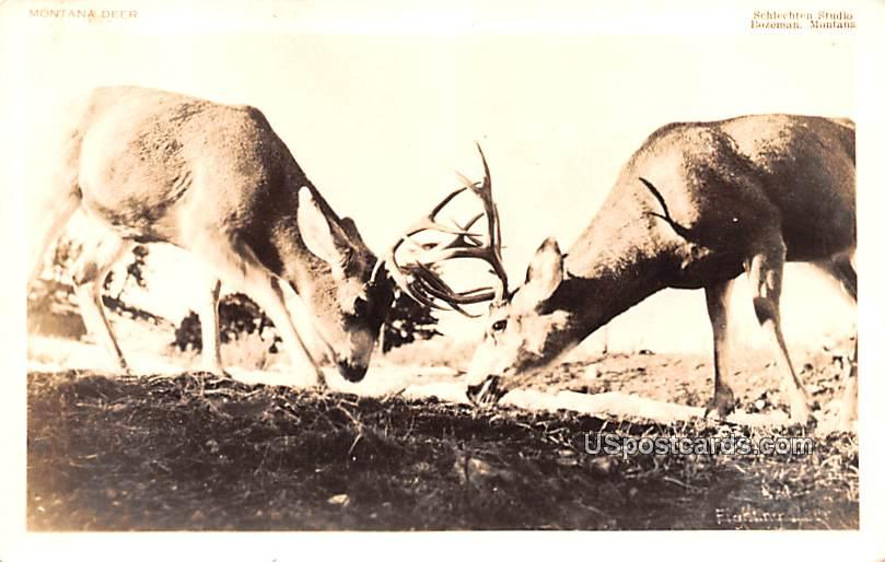 Montana Deer - Bozeman Postcard