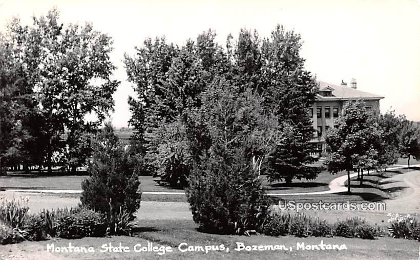Montana State College Campus - Bozeman Postcard