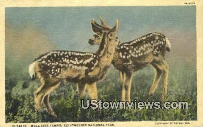 Mule Deer Fawns - Yellowstone National Park, Montana MT Postcard