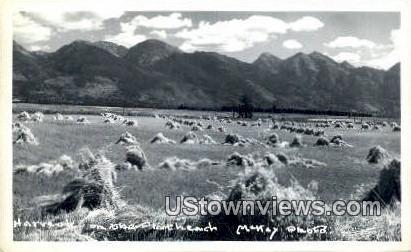 Real Photo  - Misc, Montana MT Postcard