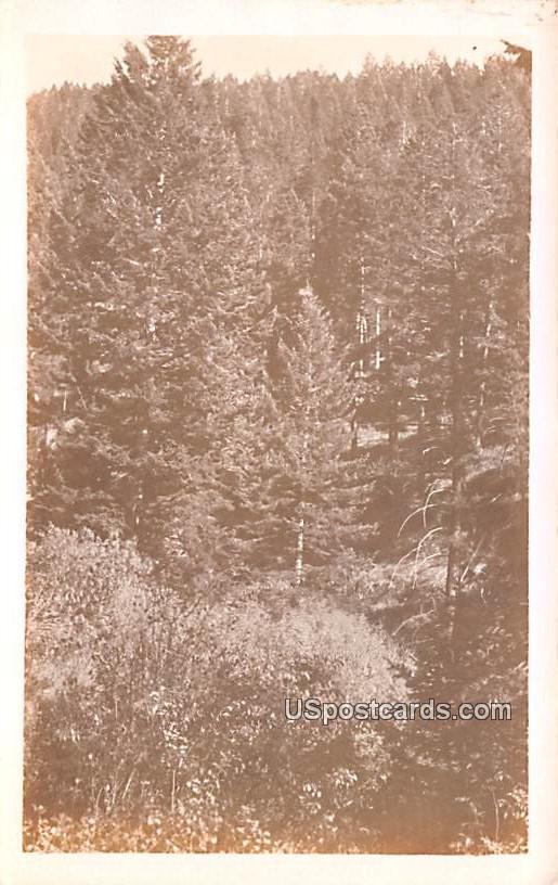 Mountain Scene - Misc, Montana MT Postcard