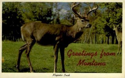 Greetings - Misc, Montana MT Postcard
