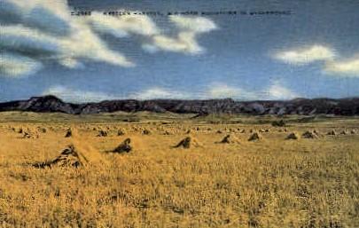 Western Harvest - Misc, Montana MT Postcard