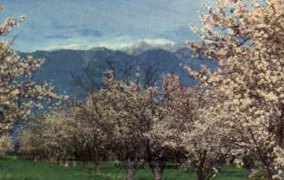 Blossom Time - Missoula, Montana MT Postcard