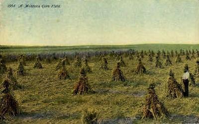 A Montana Corn Field - Misc Postcard