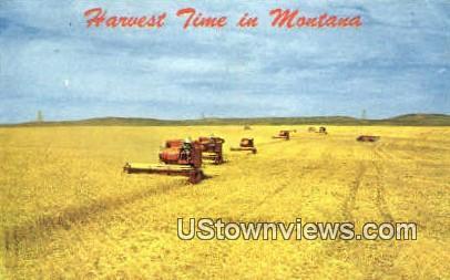 Wheat Harvest Time - Misc, Montana MT Postcard