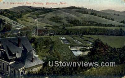 US Government Fish Hatchery - Bozeman, Montana MT Postcard