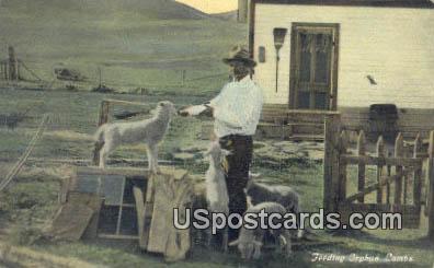 Feeding Orphan Lams - Misc, Montana MT Postcard