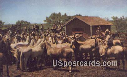 Montana Ranch - Misc Postcard