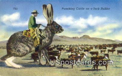 Punching Cattle on a Jack Rabbit - Misc, Montana MT Postcard