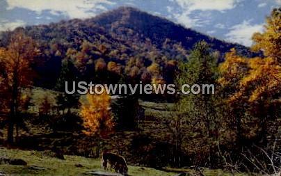 A Mountain Farm - Misc, North Carolina NC Postcard