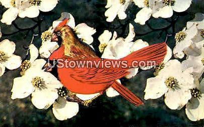 Dogwood & Cardinal-State Flower - Misc, North Carolina NC Postcard