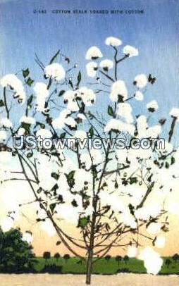 Cotton Stalk - Misc, North Carolina NC Postcard