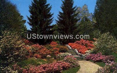 Azalea Garden - Asheville, North Carolina NC Postcard