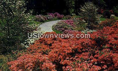 Azalea & Dogwood - Asheville, North Carolina NC Postcard