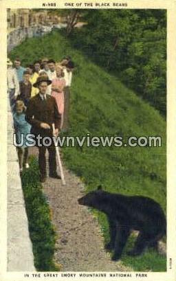 Black Bear - Great Smoky Mountains National Park, North Carolina NC Postcard