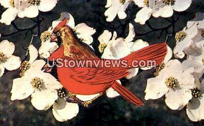 Dogwood, State Flower - Misc, North Carolina NC Postcard