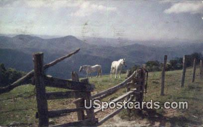 Blue Ridge Mountain Farm - Western North Carolina Postcards, North Carolina NC Postcard