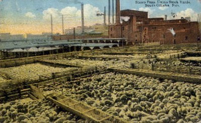 Sheep Pens, Union Stock Yards - Omaha, Nebraska NE Postcard