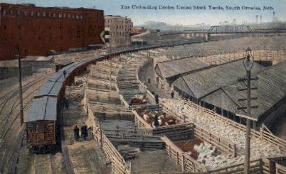 The Unloading Docks, Union Stock Yards - Omaha, Nebraska NE Postcard