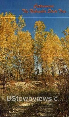 Cottonwood - State Tree, Nebraska NE Postcard