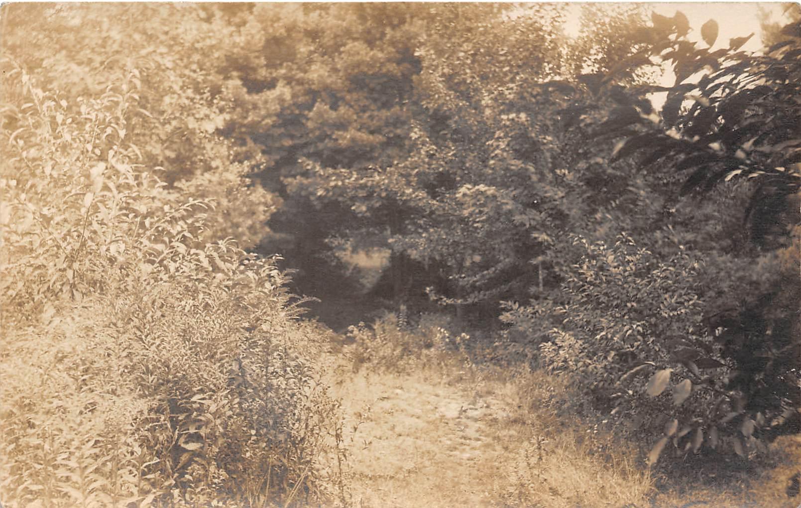Brush & Trees - Farmington, New Hampshire NH Postcard