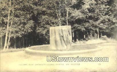 Old Pine Stump, Dartmouth College - Hanover, New Hampshire NH Postcard