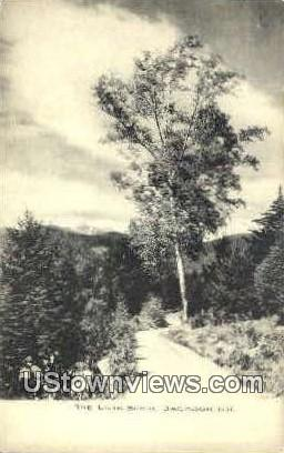 The Lone Birch - Jackson, New Hampshire NH Postcard