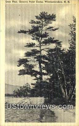 Lone Pine, Geneva Point Camp - Lake Winnipesaukee, New Hampshire NH Postcard