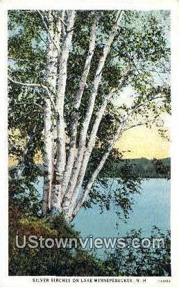 Silver Birches - Lake Winnipesaukee, New Hampshire NH Postcard