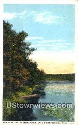 Water Lilies - Lake Winnipesaukee, New Hampshire NH Postcard