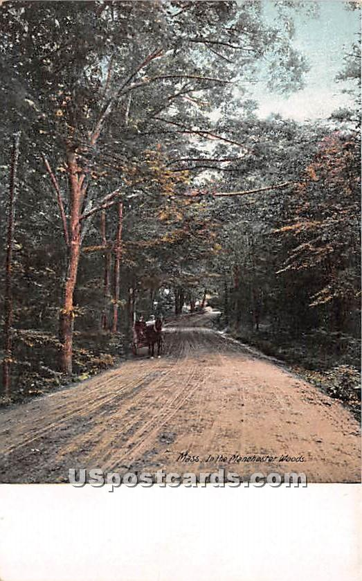 In the Woods - Manchester, New Hampshire NH Postcard