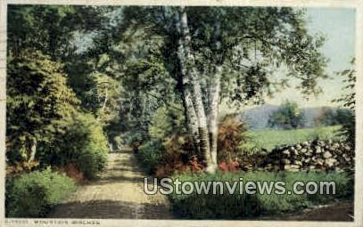 Mountain Birches - Misc, New Hampshire NH Postcard