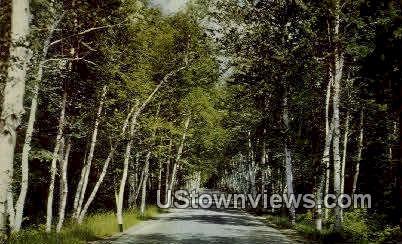 Birch Road, Shelburne - White Mountains, New Hampshire NH Postcard