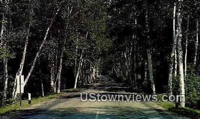 Birch Grove, Shelburne - White Mountains, New Hampshire NH Postcard