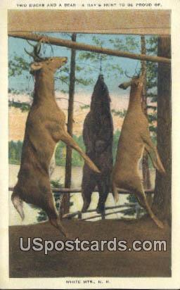 Two Bucks & Bear - White Mountains, New Hampshire NH Postcard